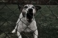Pies wbieg� na posesj� i ugryz� 6-latka