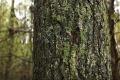 Historia Kurpi�w zapisana w drewnie (wideo)