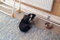 Dwa szczeniaki szukają domu