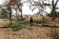 Kto wyciął drzewa w lasku przy ul. Buczka i koło miejskiej pływalni? (zdjęcia)