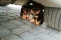 Porzucone szczeniaki szukają domu