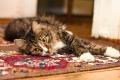Pięć powodów, dla których warto zlecić pranie dywanów i tapicerki profesjonalistom