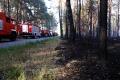 Kolejny duży pożar lasu
